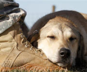 dog_on_boot