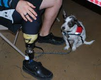 little dog and prosthetic