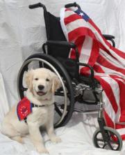 puppy by wheelchair