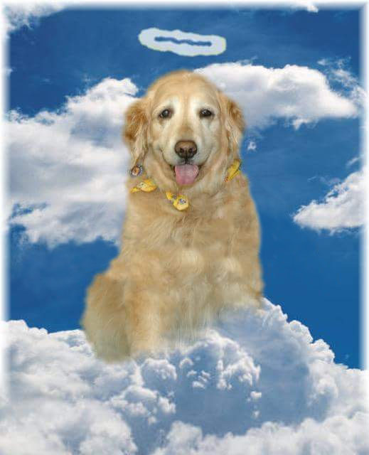 heaven-dog-without-wings